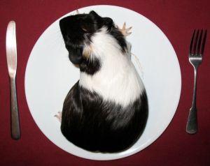 guinea on a plate