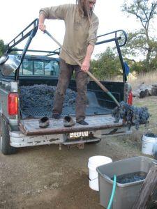 shovelinggrapes