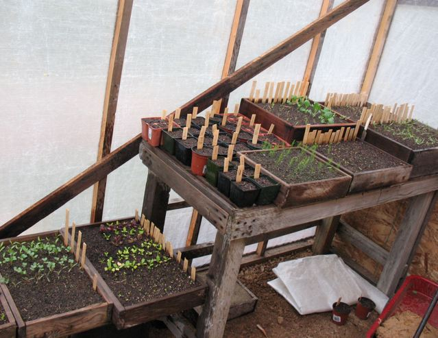 how to start vegetable seeds