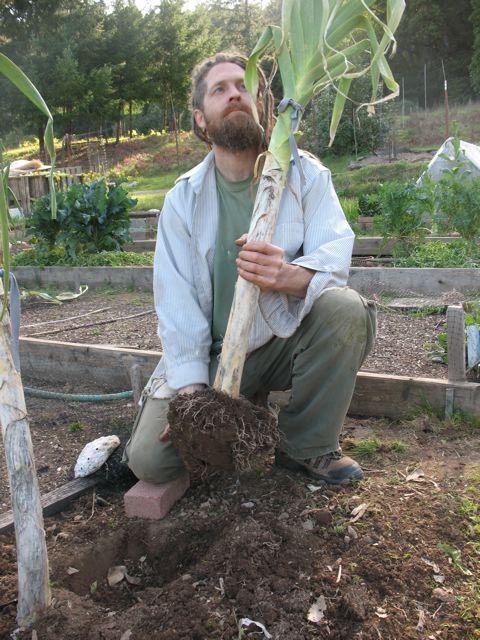 How To Grow HUGE ASS LEEKS!!! « Turkeysong