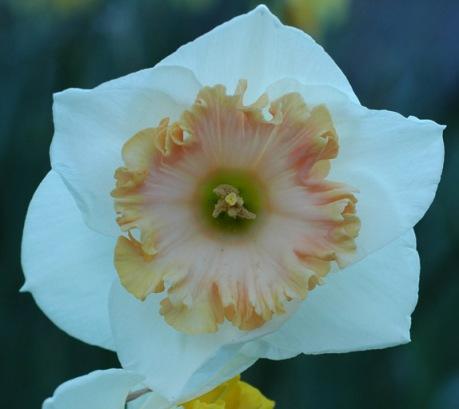 wpid-dafflustiiiyoungloveclose-2012-02-19-06-54.jpg