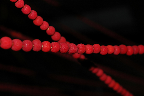 madrone berry macro 2