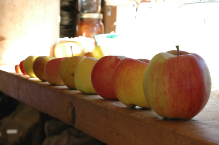 Apples awaiting taste testing.