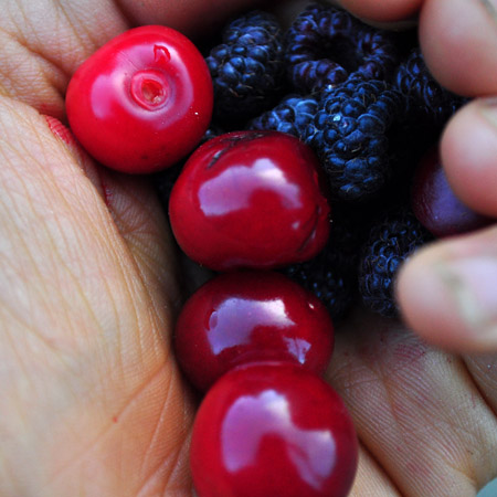 Cherries and Black caps, yum.