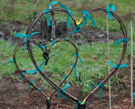 Heart shape grafted apple trees. These two actually died, but I know it can work because I've done it before. One heart shaped apple tree is growing along the driveway.