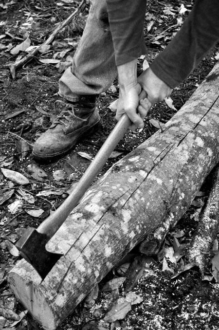 Peeling tanoak bark for tanning skins