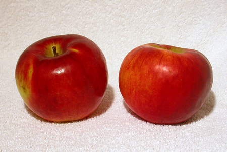 Cortland. The only apple I know of from the Geneva experiment that has stood the test of time.