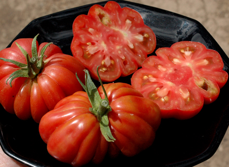 Zapotec. This outstanding tomato is quite meaty. It's not as meaty as some processing types, like Blue Beech (which has so few seeds that one of Fedco's seed growers calls it Blue Bitch) but it's pretty darn meaty. It tastes fabulous with a very rich tomatoey flavor. If it peels Ok, with it's pleatedness, I'm thinking it will make a pretty great dual purpose tomato for market, fresh eating and canning.
